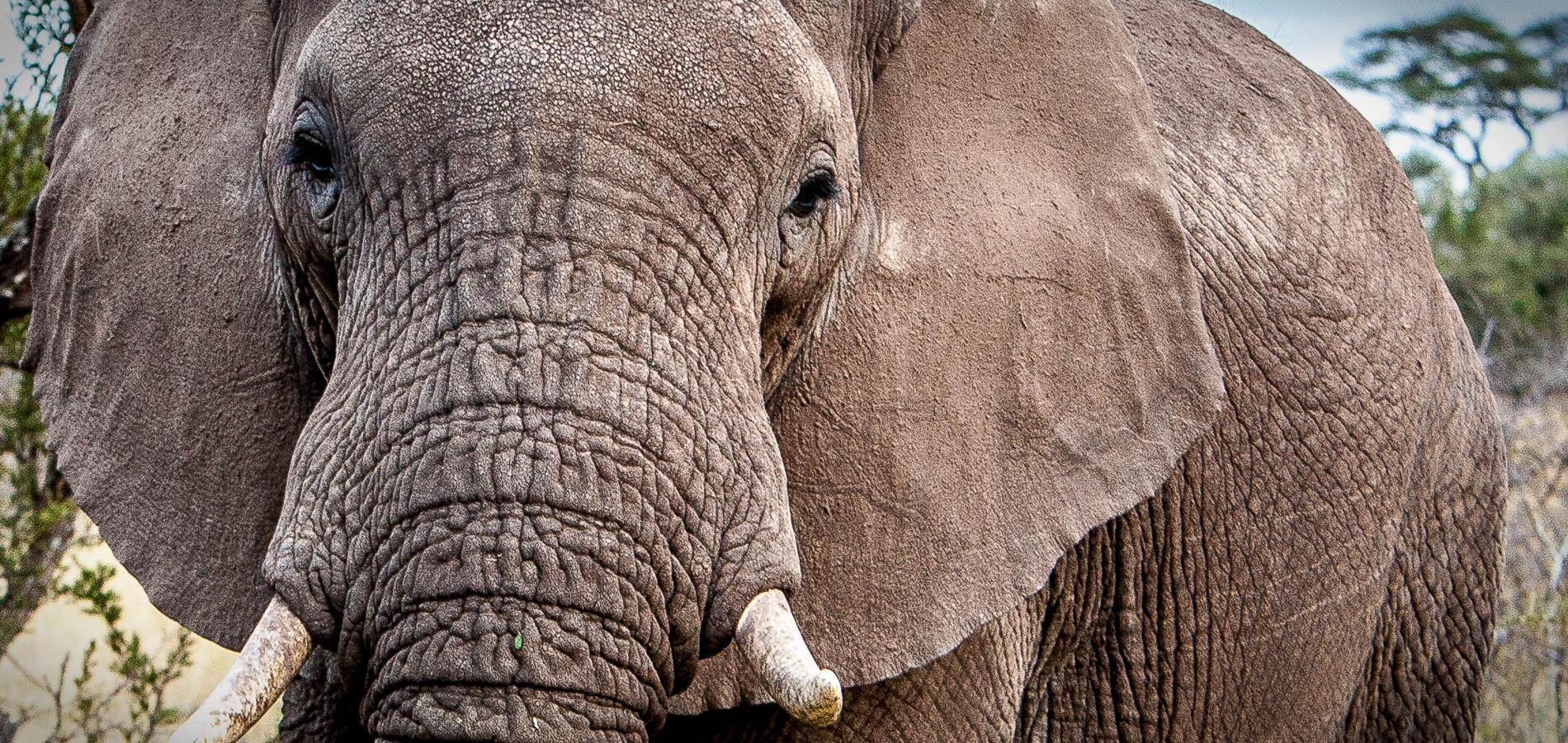 Serengeti I Tanzania